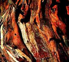 Colours of a shedding Gum by Marilyn Harris