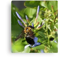 Bumble bee on blue flowers Canvas Print