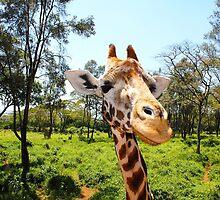 Giraffe portrait in Nairobi National Park - Kenya, Africa by Atanas Bozhikov Nasko