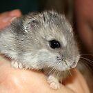 Stitch the Hamster by AuntDot