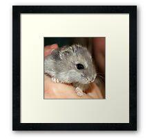 Stitch the Hamster Framed Print