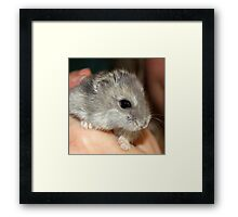 Stitch the Hamster Framed Print