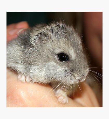 Stitch the Hamster Photographic Print