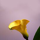 One calla starring! by bubblehex08