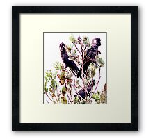 Endangered - Short-billed Black Cockatoo Framed Print