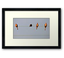 There's One In Every Crowd Framed Print