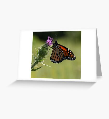 Pretty as a Picture Greeting Card