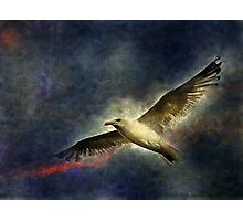 Soaring Photographic Print