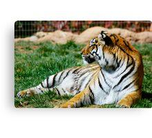 Reclining Tiger Canvas Print