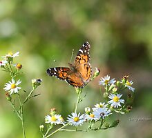 Painted Lady Butterfly by Terry Aldhizer