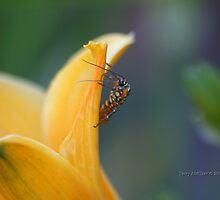 That 70's Bug On Tulip by Terry Aldhizer