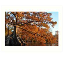 Cypress Fall Art Print