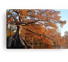 Cypress Fall Metal Print