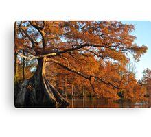 Cypress Fall Canvas Print