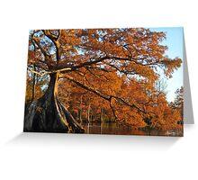 Cypress Fall Greeting Card