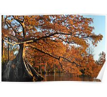 Cypress Fall Poster