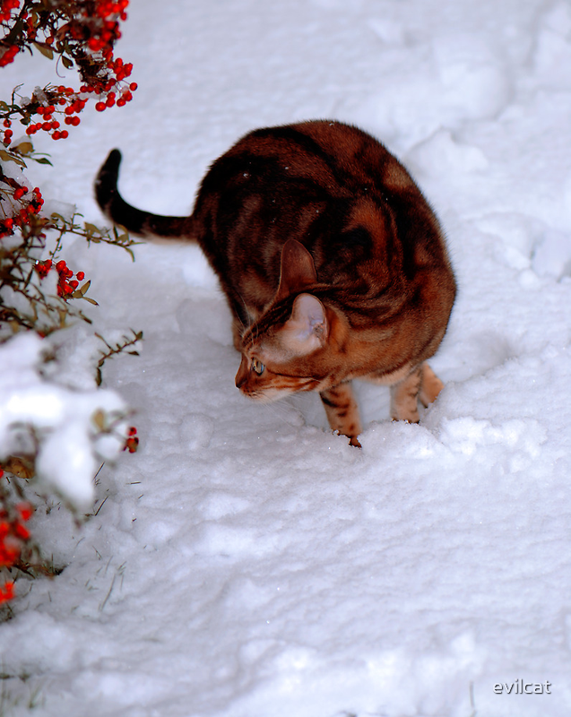 Diva investigating the snow by evilcat