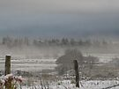 snow covered world outside my window by millymuso
