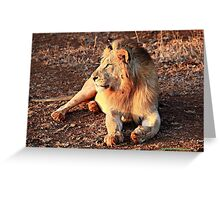 Life with the Lions - In the Sun Greeting Card
