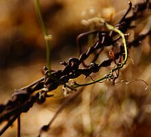 8-mile creek barbed wire by agenttomcat