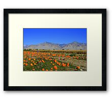 the Pumpkin Patch Framed Print