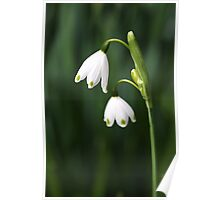 Snowdrops Painted Finger Nails Poster