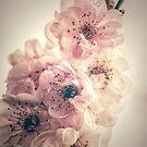 Vintage Cherry by yolanda
