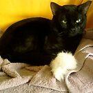 aint I cute by catnip addict manor