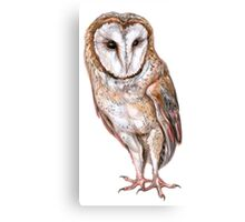Barn owl drawing Canvas Print