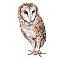 Barn owl drawing Photographic Print