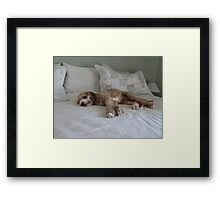 Guess Who I Caught Resting On Our Bed!! Framed Print