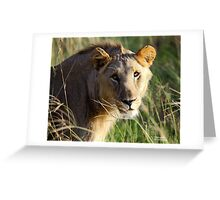 Madikwe Lions Young Pretenders 4 Greeting Card
