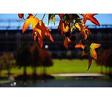 Arlington Stadium  Photographic Print