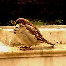 Chickadee by Charcoalfeather