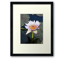 Water Lillies 11 Framed Print