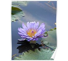 Water Lillies 13 Poster