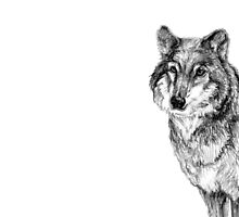 Grey wolf illustration by stasia-ch