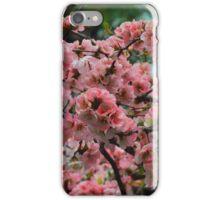 Pretty in Peach 3 iPhone Case/Skin