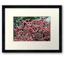 Pretty in Peach 3 Framed Print