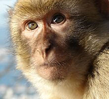 Cool Macaque by cute-wildlife