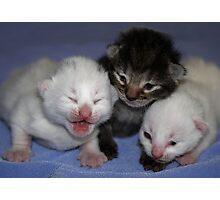 Kittens-One Week Old Photographic Print