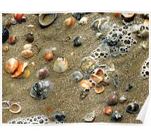 Sea Shells on the Sea Shore Poster