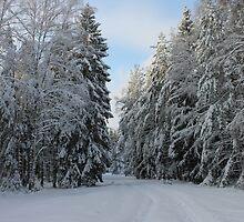 Winter by franceslewis