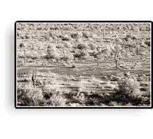 cactus desert arizona Canvas Print