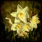 jonquils again by Deb Gibbons