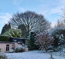 Our Garden This Morning by lynn carter