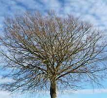 Big  Tree by lynn carter