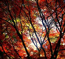 Autumn Trees By Emma McGarry by Frances McGarry