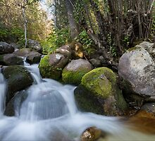 Bell's Canyon River by Alan Mitchell