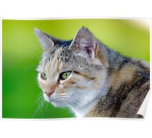 Smokey The Cat on Grass Poster